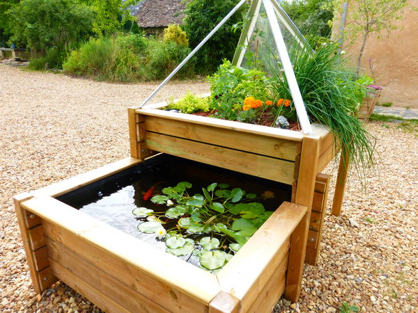 Aquaponie : le potager écologique